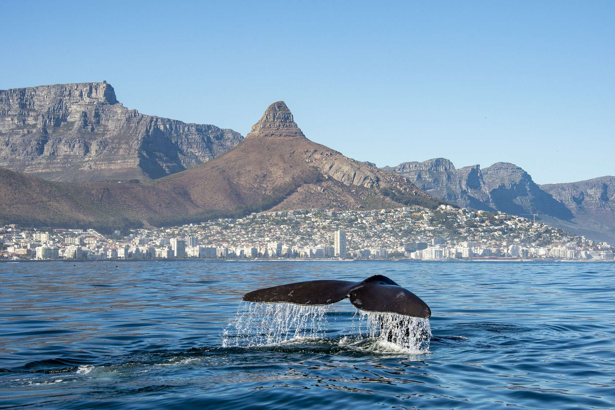 Au grand air sud africain
